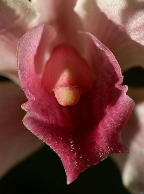 Most Beautiful Vagina