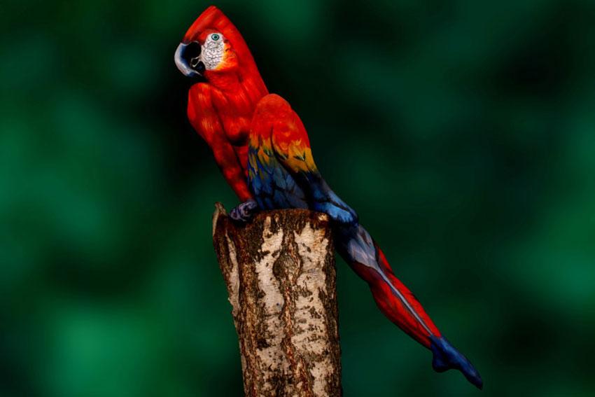 parrot-feature